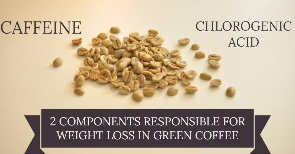 How green coffee helps in weight loss